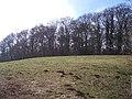 Badley Wood - geograph.org.uk - 123922.jpg