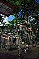 Bali – Cremation Ceremony (2688338674).jpg
