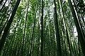 Bamboo forest in Sagano, Kyoto - panoramio.jpg