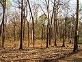 Bandipur Tiger Reserve - panoramio (16).jpg