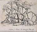 Banyan tree with many trunks-W. Stoker, D. Redman after James Forbes., 1811.jpg