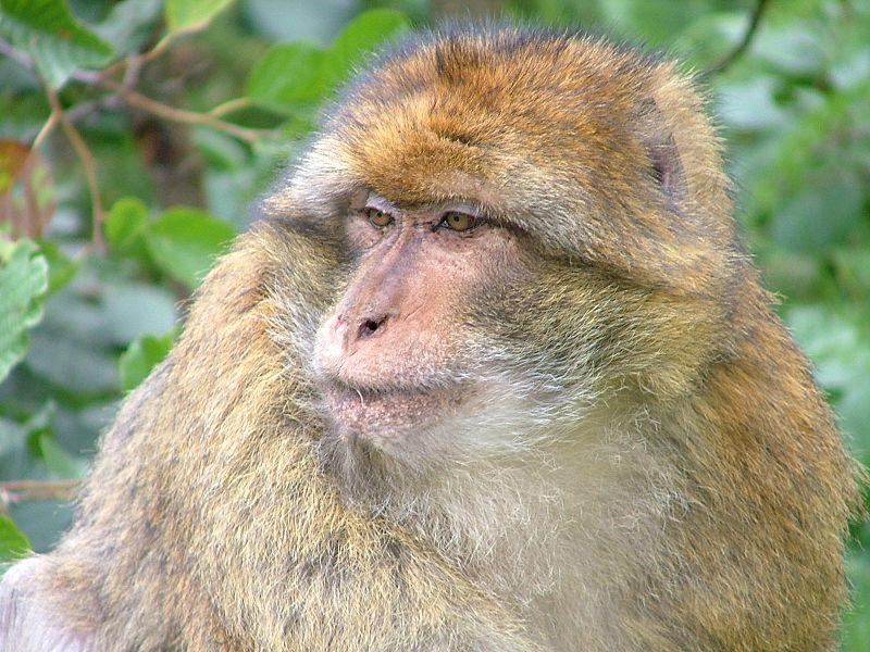تعرف على اسم الحيوان الأرشيف الصفحة 2 شبكة الناصرة