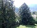 Barga, Province of Lucca, Italy - panoramio - jim walton (8).jpg