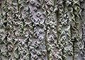 Bark (3968995234) (2).jpg