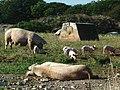 Barn Farm - geograph.org.uk - 53832.jpg