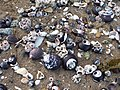 Beach seashells (48338291972).jpg