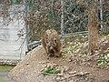 Bear (2379586463).jpg