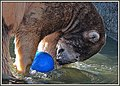 Bear with blue ball (44304886910).jpg
