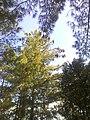 Beautiful Tree.jpg