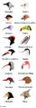 Becs dels ocells.PNG