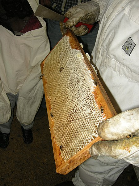 Cadre de ruche d'abeille à miel.