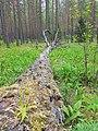 Belaja Rus' nature reserve -2.jpg