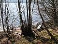 Bench beside Loch Rannoch - geograph.org.uk - 377212.jpg