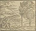 Benzoni 1565 f 103r cacauate.jpg