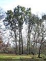 Bergpark Wilhelmshöhe - Baum 491 2019-12-19 d.JPG