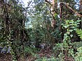 Berry Mountain, New South Wales.jpg