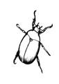 Besouro, um inseto muito apreciado como alimento pelos nativos.pdf