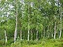 Afbeelding van Wikimedia Commons