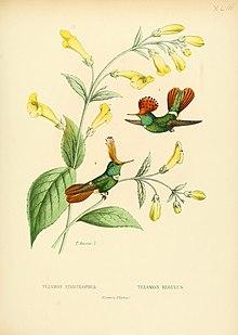 Bevalet hummingbirds.jpg