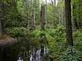 Białowieża National Park, Poland (4663852495).jpg