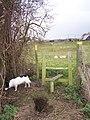 Big Rabbit holes near Style - geograph.org.uk - 1067890.jpg
