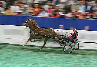 Sulky lightweight cart used for harness races