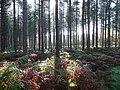 Binton Wood - geograph.org.uk - 646777.jpg