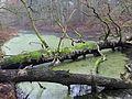 Biosphärenreservat Niedersächsische Elbtalaue Gebietsteil C-77 Elbholz.jpg