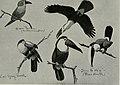 Bird-lore (1914) (14752228211).jpg