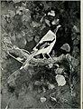 Bird notes (1913) (14750034305).jpg