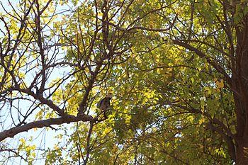Birdy perched on tree.jpg