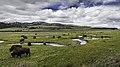 Bison on Rose Creek, Lamar Valley (edd458ab-7660-4460-933c-c9db16ebc17b).jpg