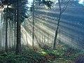 Black Forest (near Elztal) 12 (39559658854).jpg
