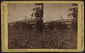 Blackwell's Island, New York, from Robert N. Dennis collection of stereoscopic views.png