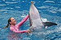 Blue Horizons Dolphin show (8803749784).jpg