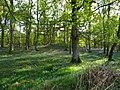 Bluebell Woods (6).jpg