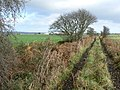 Boggy track - geograph.org.uk - 609892.jpg
