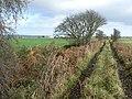 Boggy track - geograph.org.uk - 609892.jpg