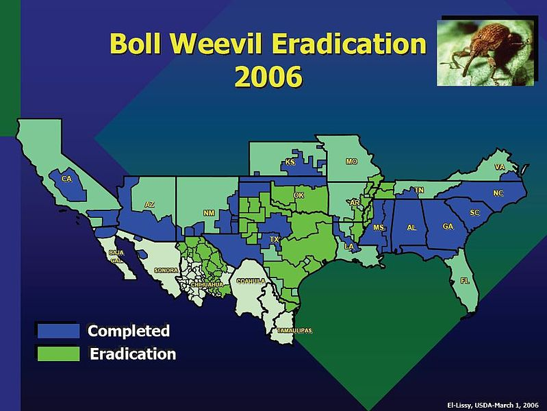File:Boll weevil eradication.jpg