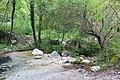 Bosco -Senerchia- Oasi naturale Valle della Caccia -Avellino 11.jpg