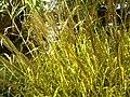 Botanischer Garten Freiburg - Botany Photography - panoramio (26).jpg