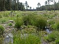 Boveridge Heath, conservation - geograph.org.uk - 1354426.jpg