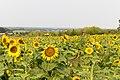 Bowden Sun Maze (38288635202).jpg