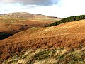 Bracken covered hillside - geograph.org.uk - 638732.jpg