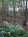 Bracken fronds still green - geograph.org.uk - 1031206.jpg