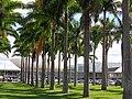 Brasilia DF Brasil - Palmeiras Imperiais - panoramio.jpg