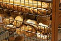 Bread rolls at a bakery.jpg