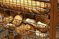 Bread rolls at a bakery.jpg