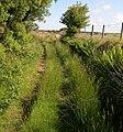Bridleway to Bryngwyn - geograph.org.uk - 1357143.jpg
