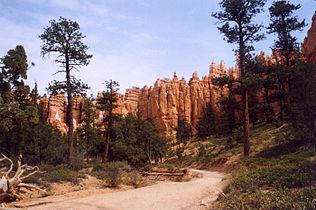 Bryce Canyon Navajo Trail10.jpg